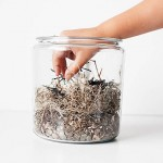 all-for-the-boys-halloween-terrarium-2