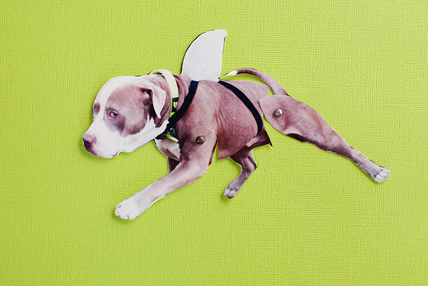 National dog day craft
