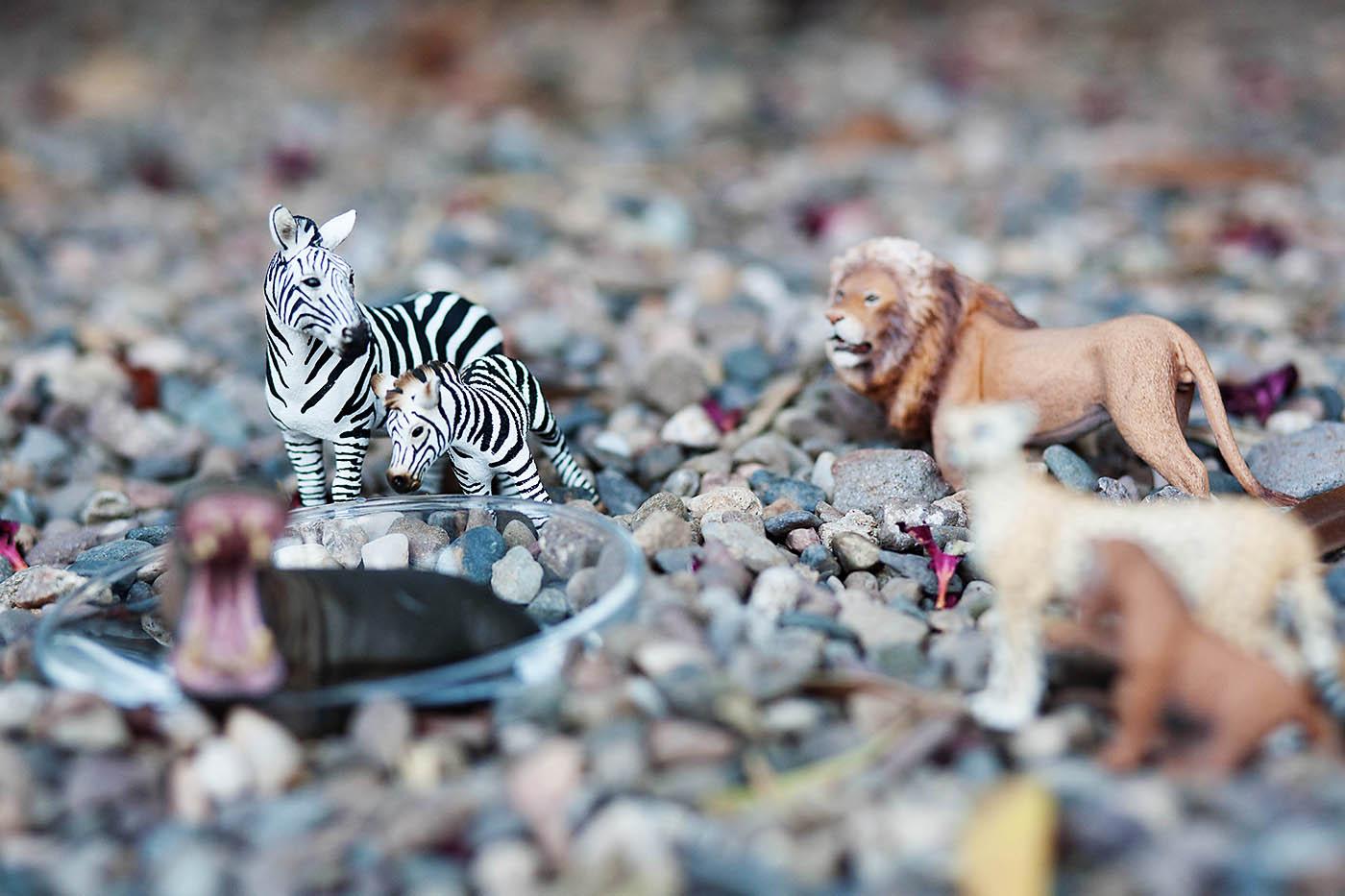 Pretend play: go on a safari