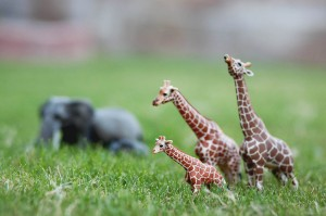 Pretend play: go on a safari