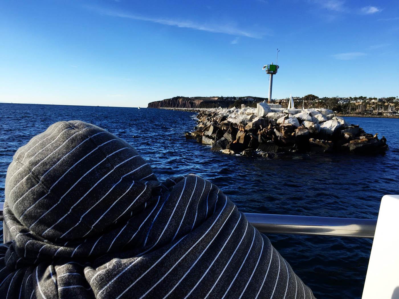 Dana Wharf whale watching