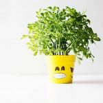 DIY emoji flower or plant pot