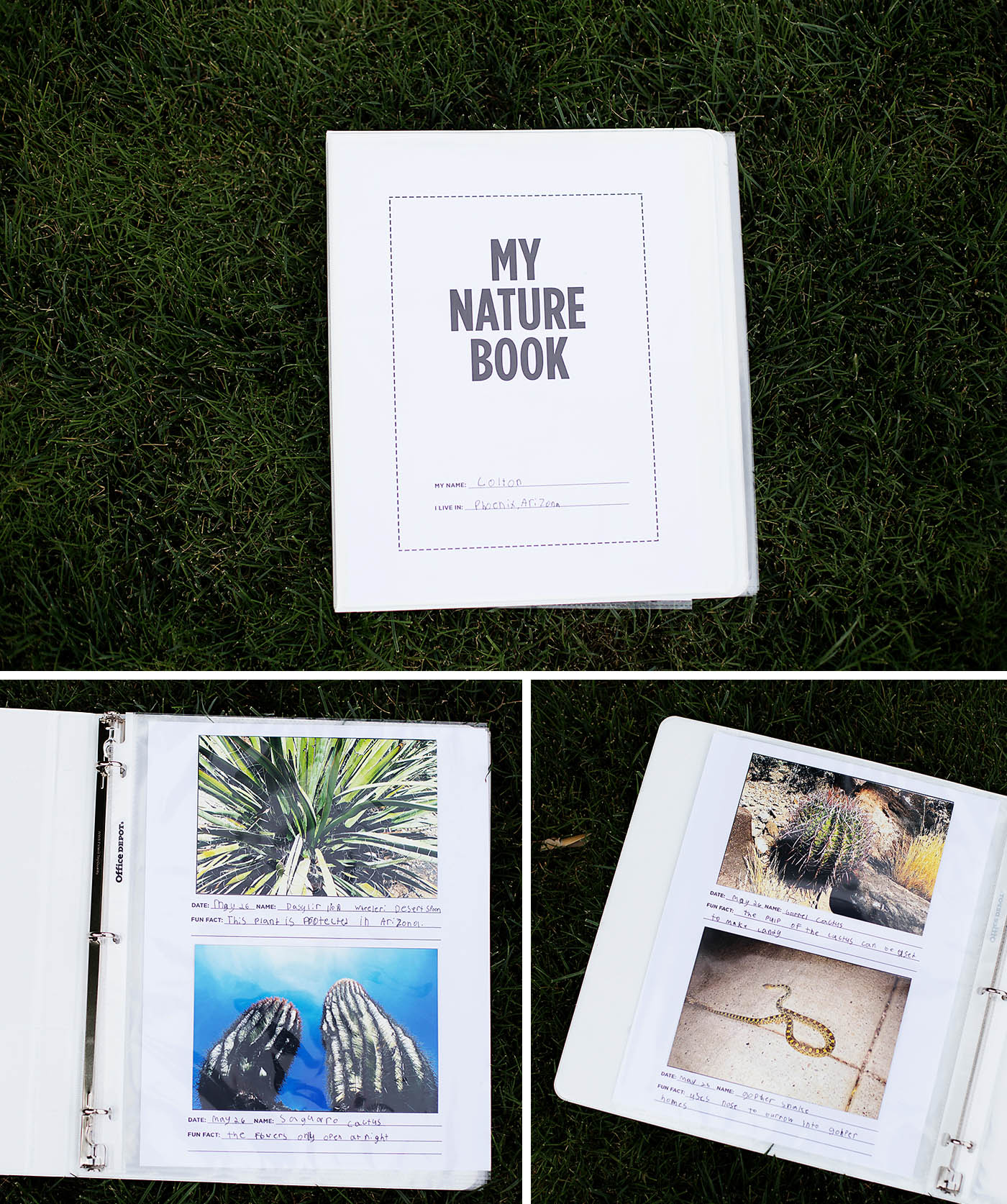 DIY nature book - with printables!