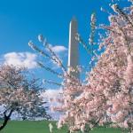 Mons_Mems_12_BlossomsandWashingtonMonument