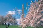 Spring Break in Washington DC