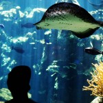 Aquarium of the Pacific, Long Beach CA