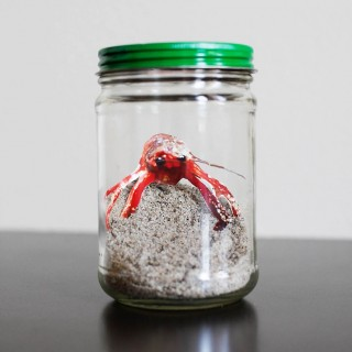 Mess Free Pet in a Jar + $15 Off Time Saving Google Express