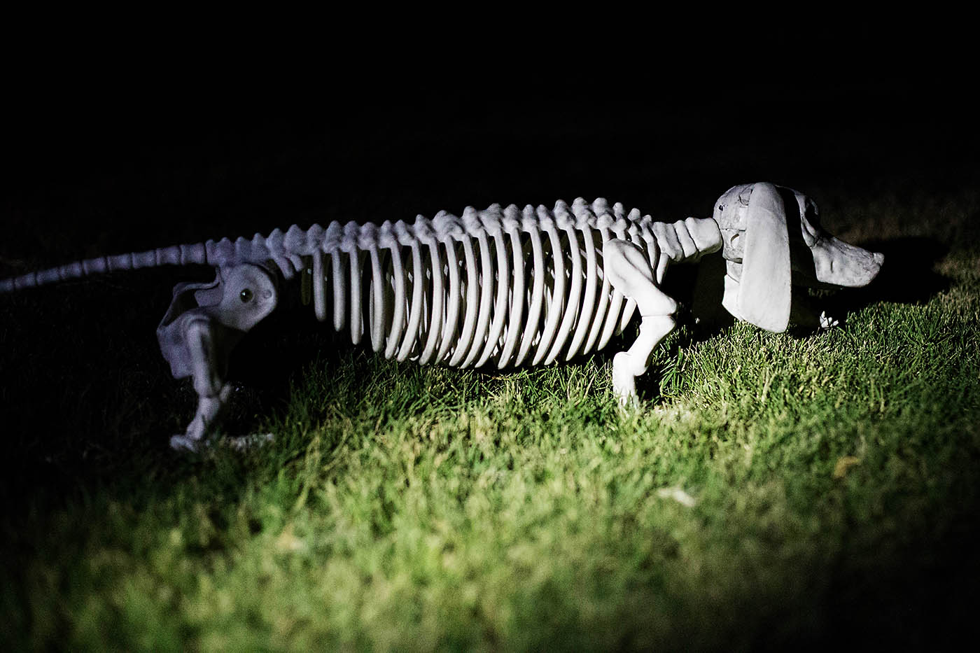 Animal Skeleton Flashlight Hunt — All for the Boys