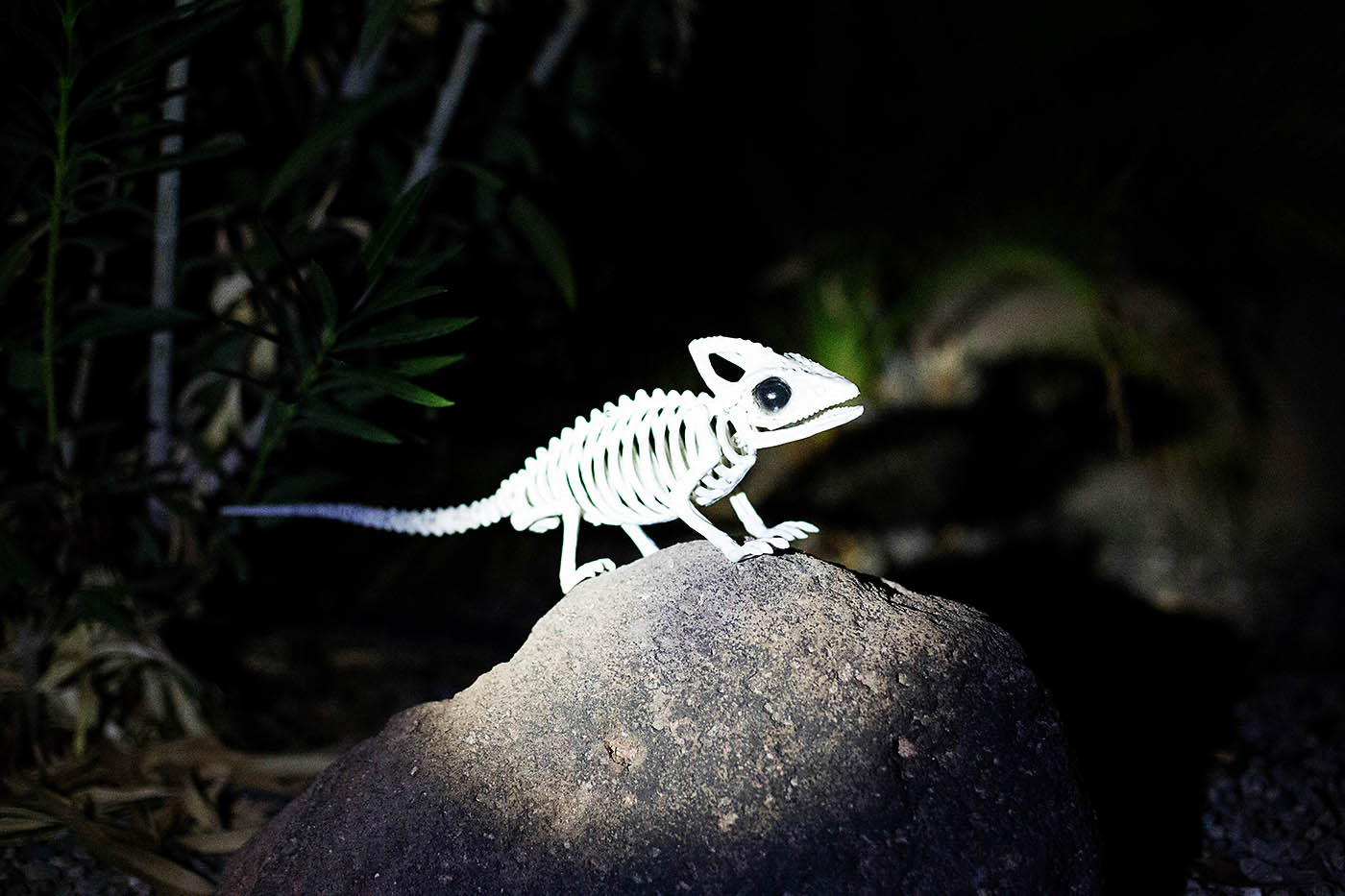 Animal skeleton flashlight hunt - fun activity or game for Halloween