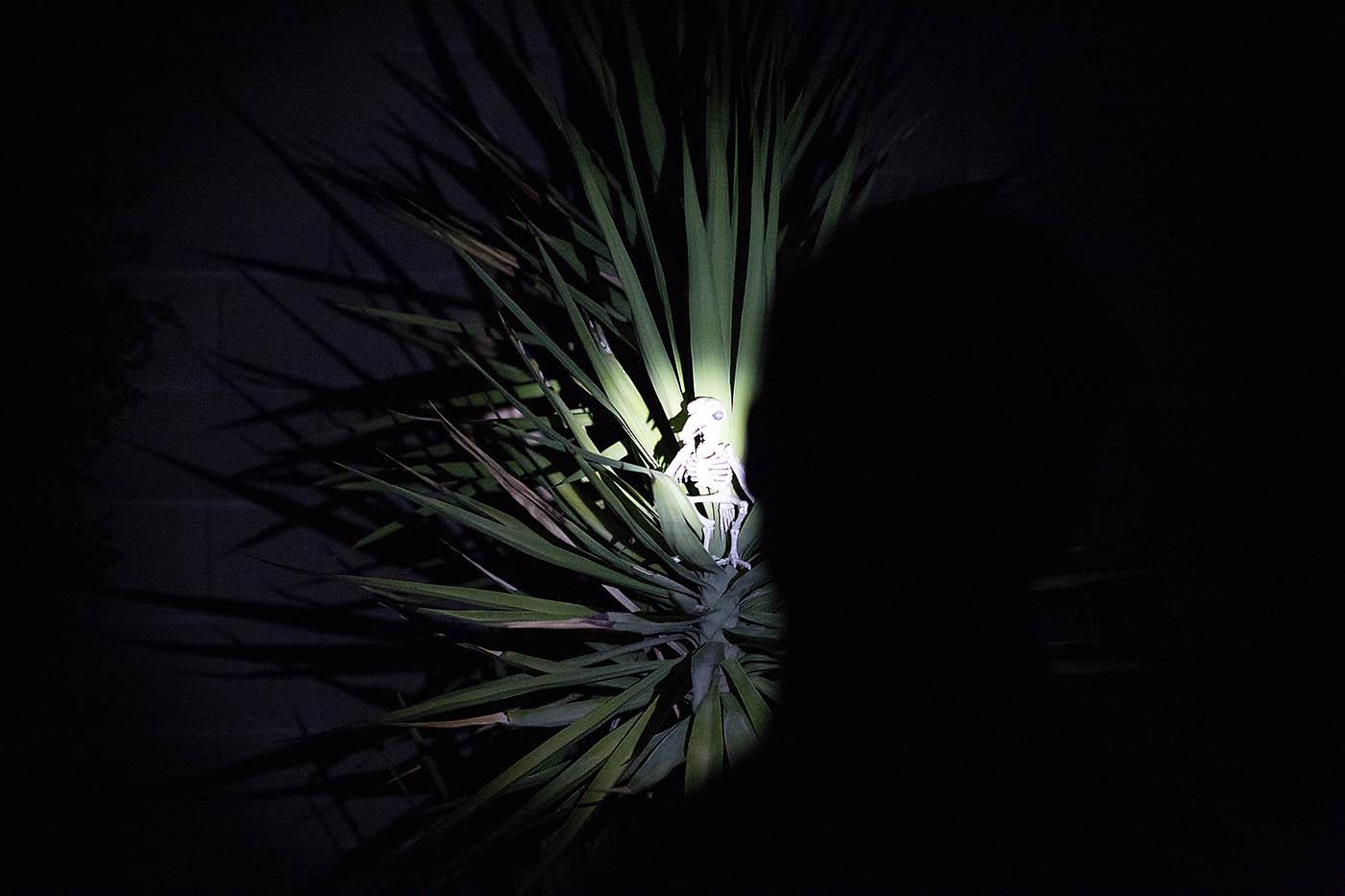 Animal skeleton flashlight hunt - fun activity or game for Halloween