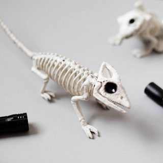 Animal Skeleton Flashlight Hunt