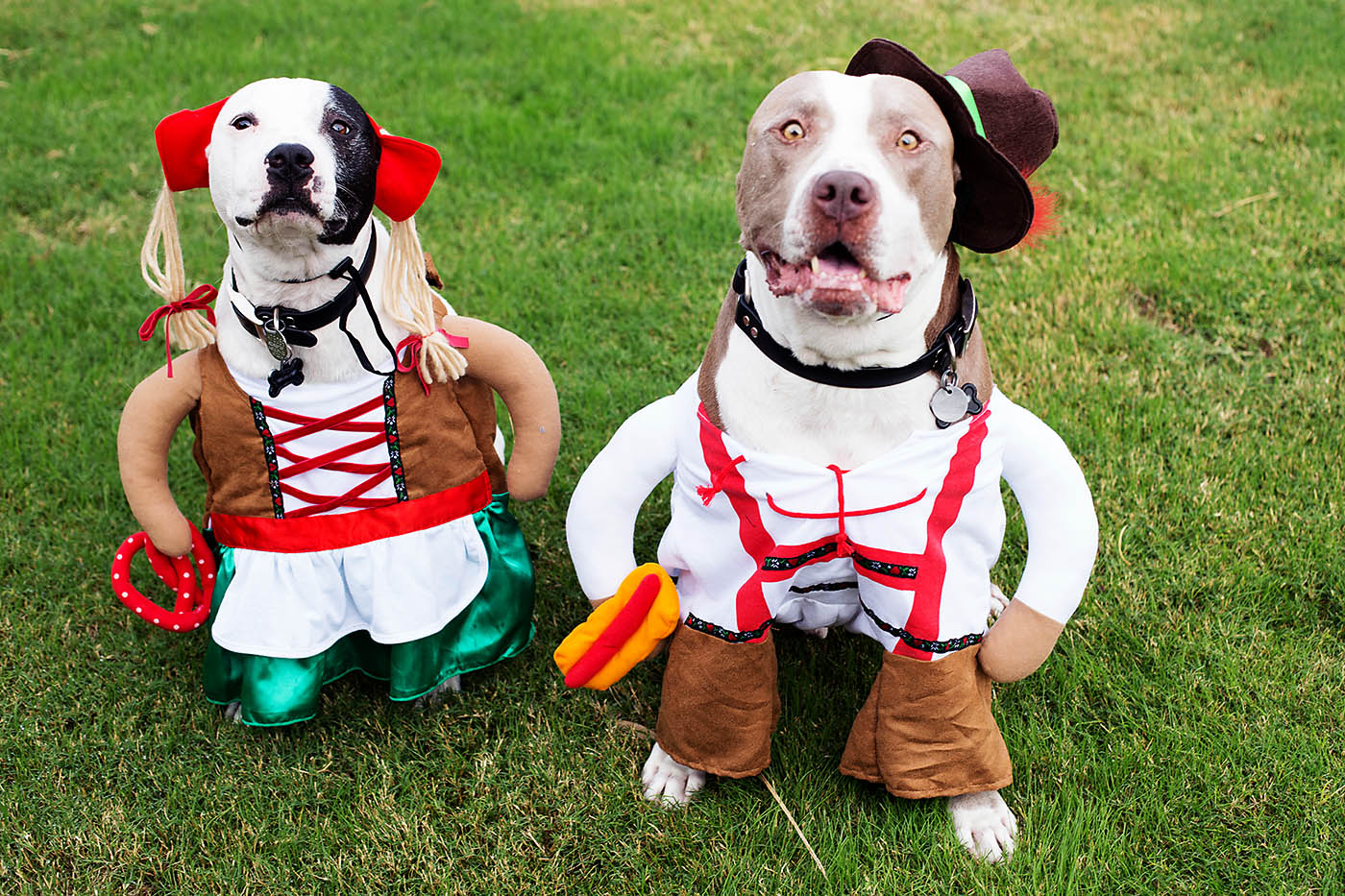 German dog costume