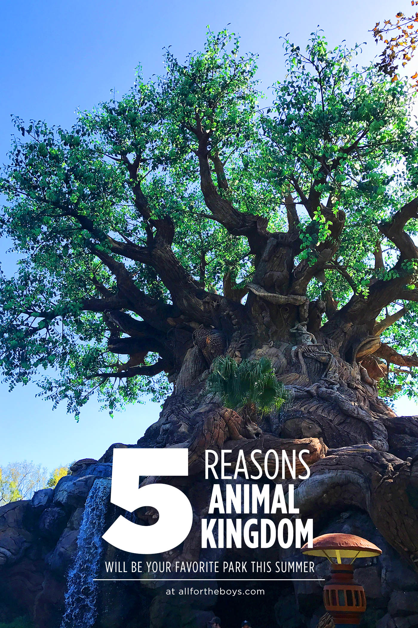Why Animal Kingdom should be your new favorite park at Walt Disney World