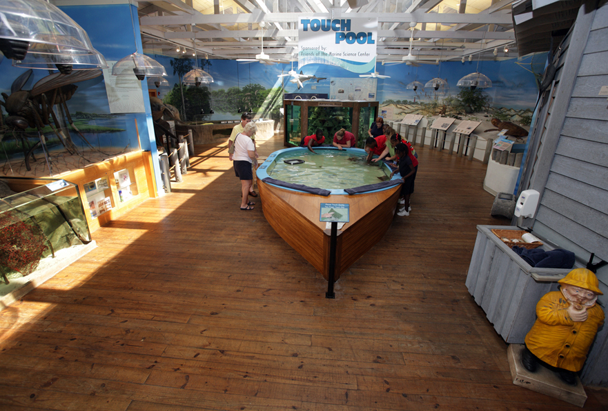 Take an environmental journey at the Marine Science Center and expand your knowledge of the Daytona Beach area's diverse wildlife. Witness current rehabilitation efforts for live sea turtles and seabirds, explore fascinating mangrove and whale exhibits and meet the residents of a huge, artificial reef aquarium.