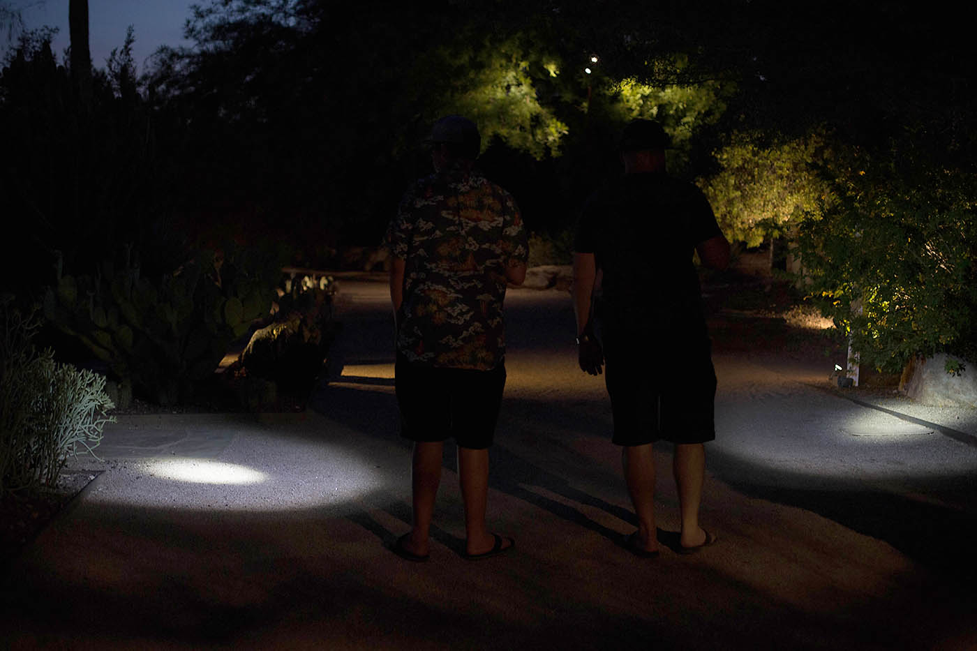 Flashlight Tours at Desert Botanical Gardens in Phoenix, AZ