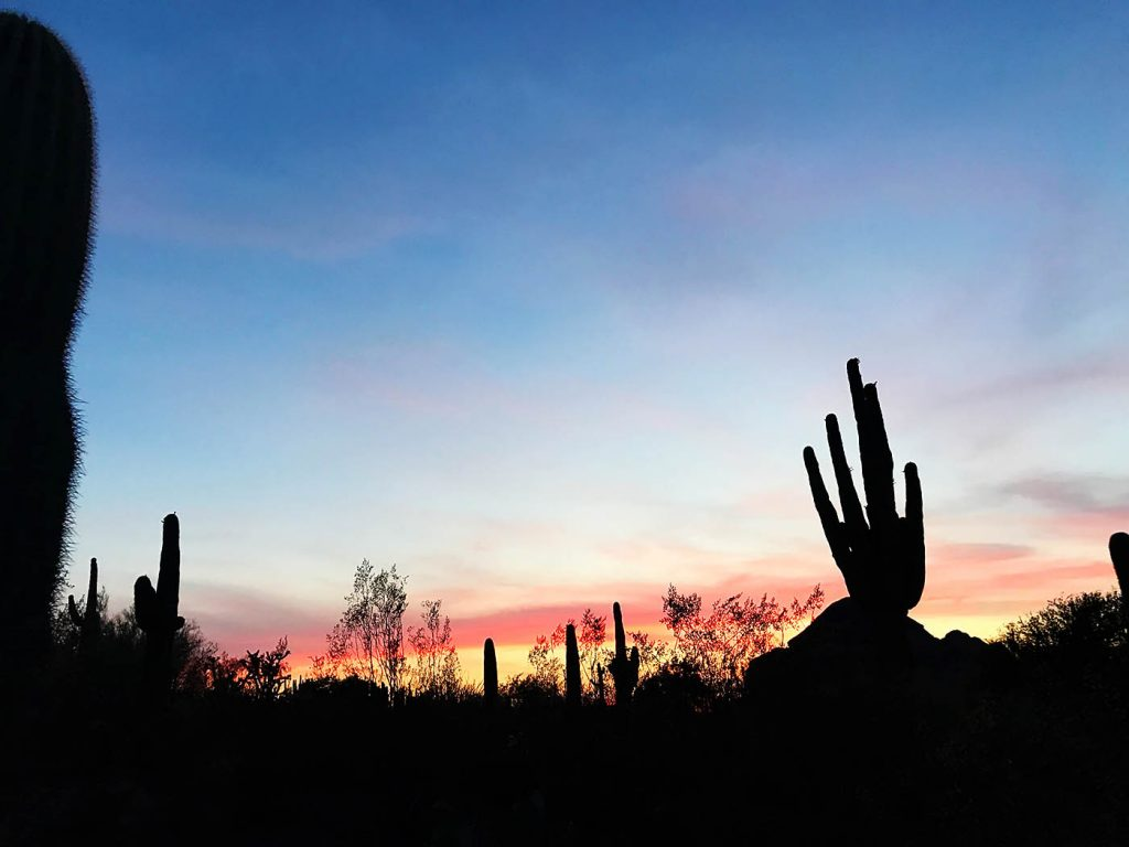 Phoenix Summer: Flashlight Tours at Desert Botanical Garden
