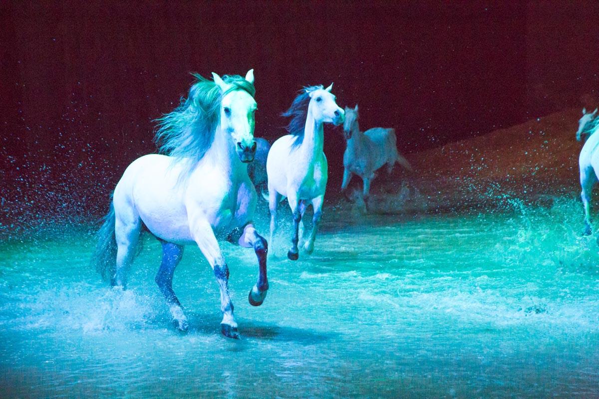 Experiencing Cavalia: Odysseo in Scottsdale, AZ