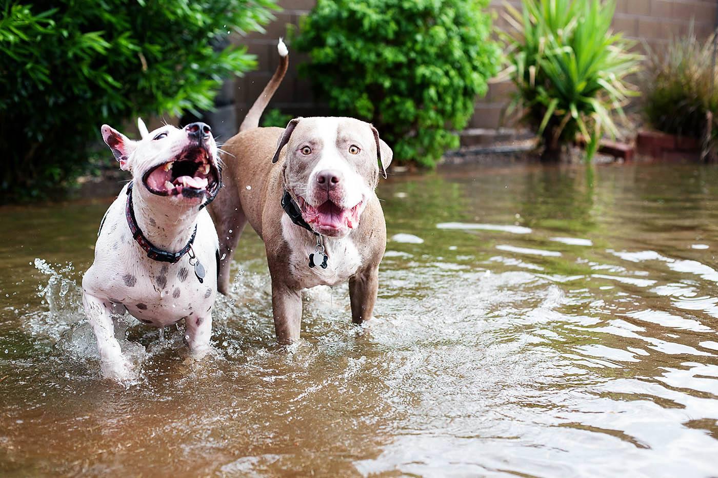 Dogs running through water from Allison Waken