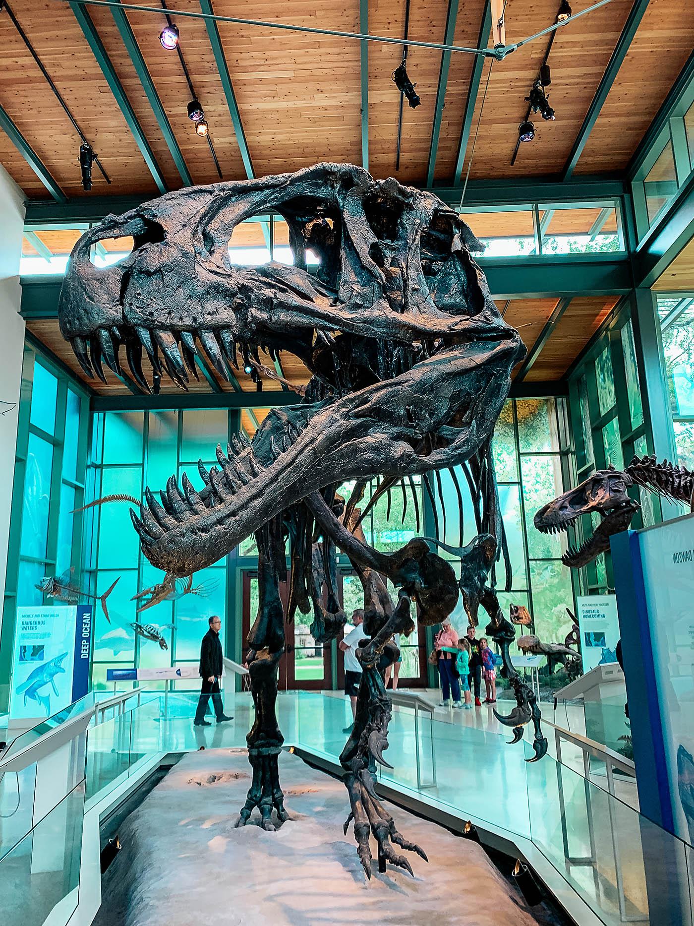 Large dinosaur skeleton